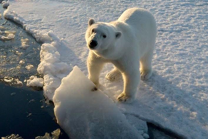 ghiacciai clima ansa-2