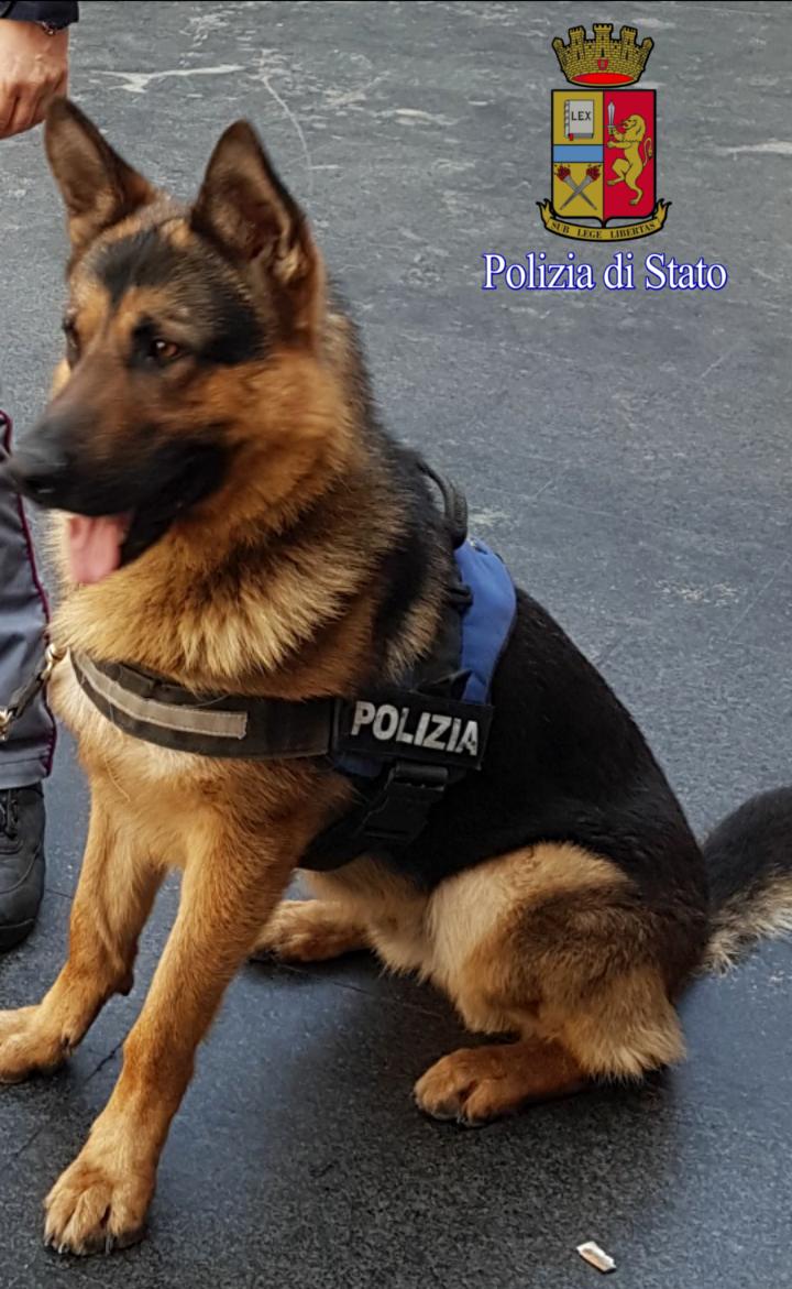 Ares, da randagio a cane poliziotto antiterrorismo per le strade di Roma