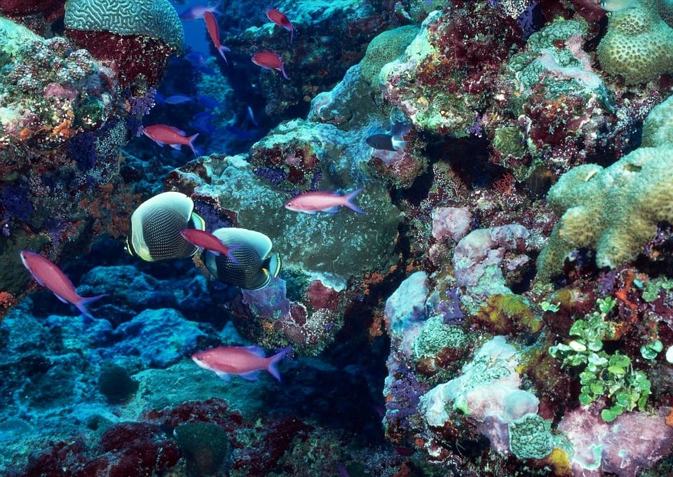 barriera corallina pixabay-2