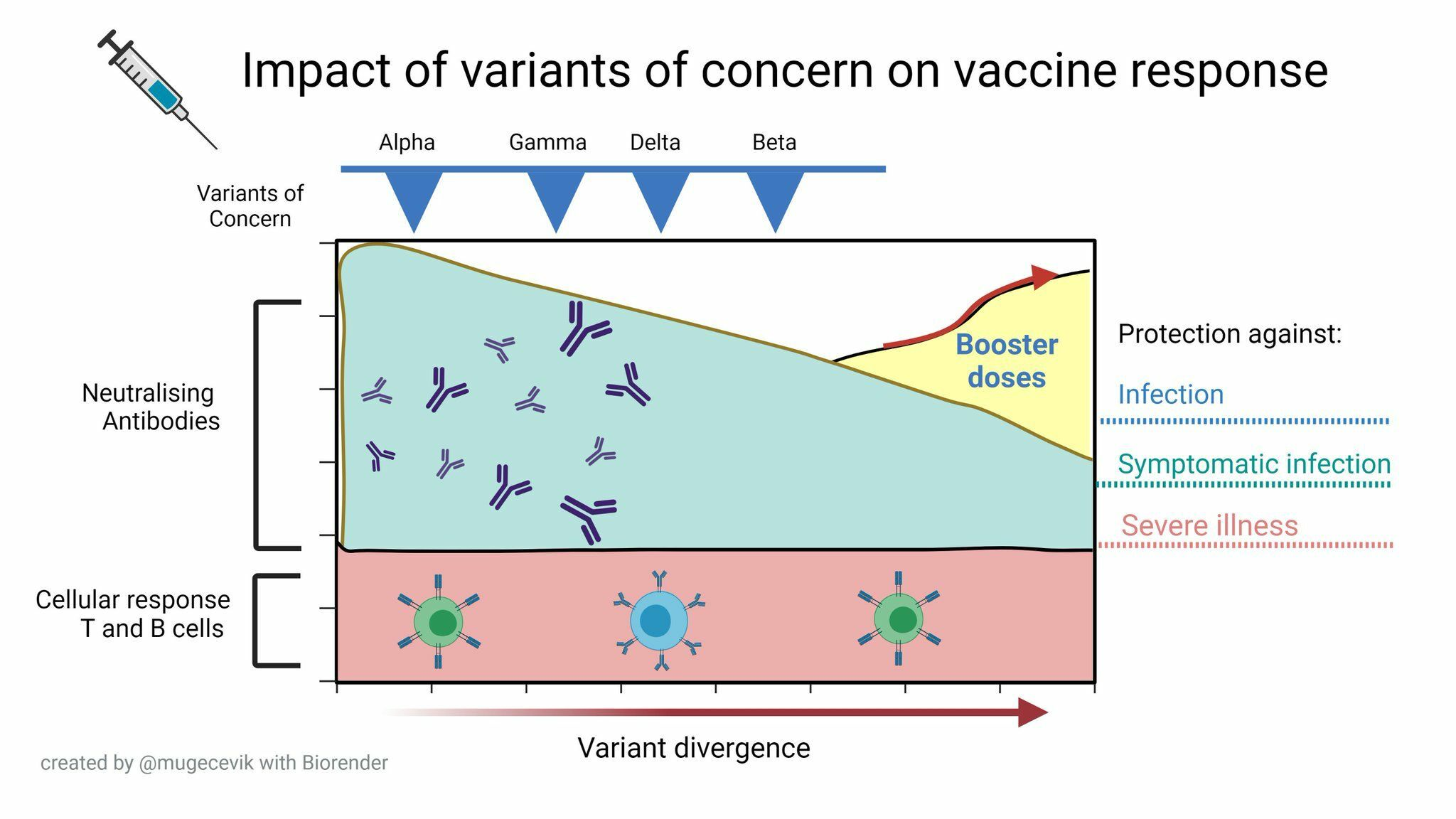 Quanto durano i vaccini e quando è necessaria la terza dose
