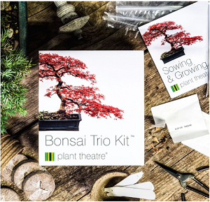 Plant Theatre - Bonsai Trio-2
