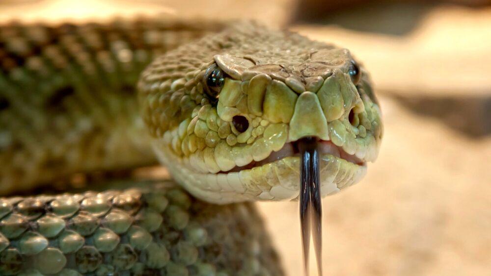 Morso dallo stesso serpente 8 volte in un mese: ora vive nella paura di incontrarlo di nuovo
