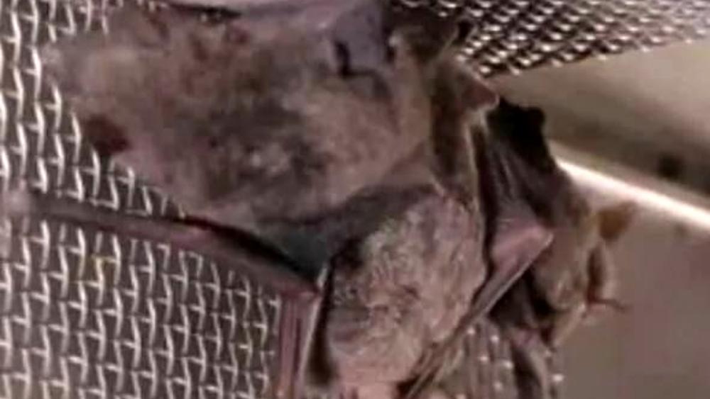 """Il video """"con i pipistrelli vivi"""" nel laboratorio di Wuhan: nuovi dubbi sull'origine del coronavirus"""