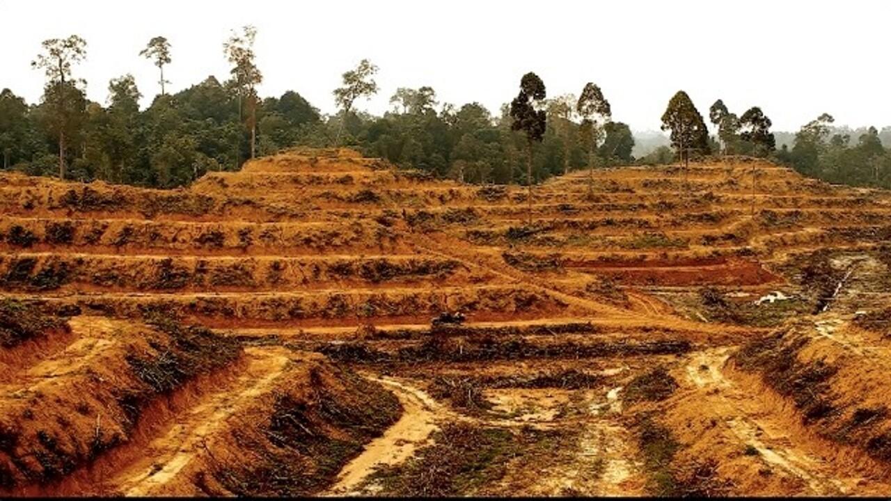 """""""I biocarburanti dell'Ue hanno causato la deforestazione di un'area grande come l'Olanda"""""""