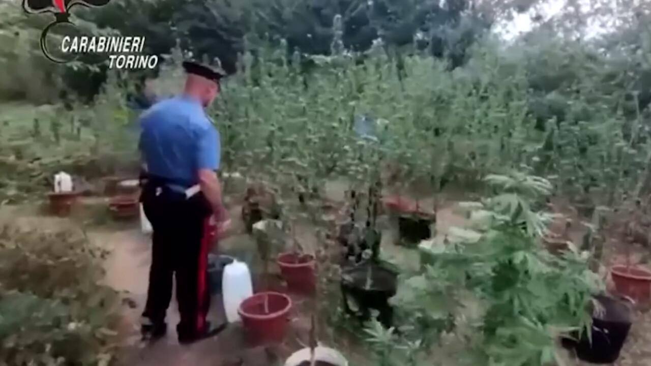 L'uomo che coltiva marijuana nel giardino dell'azienda in cui lavora