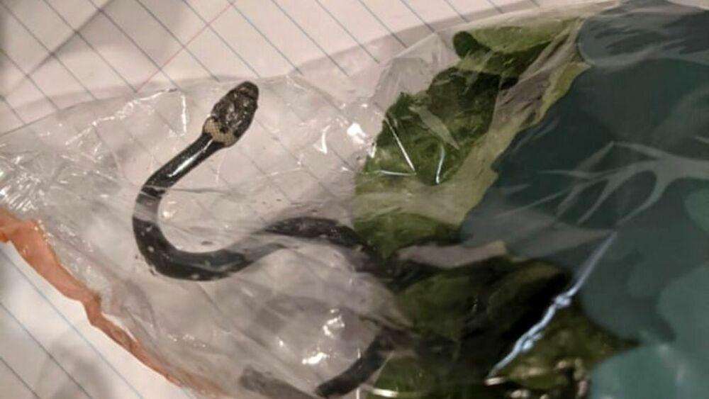 La coppia che ha trovato un serpente nella busta dell'insalata
