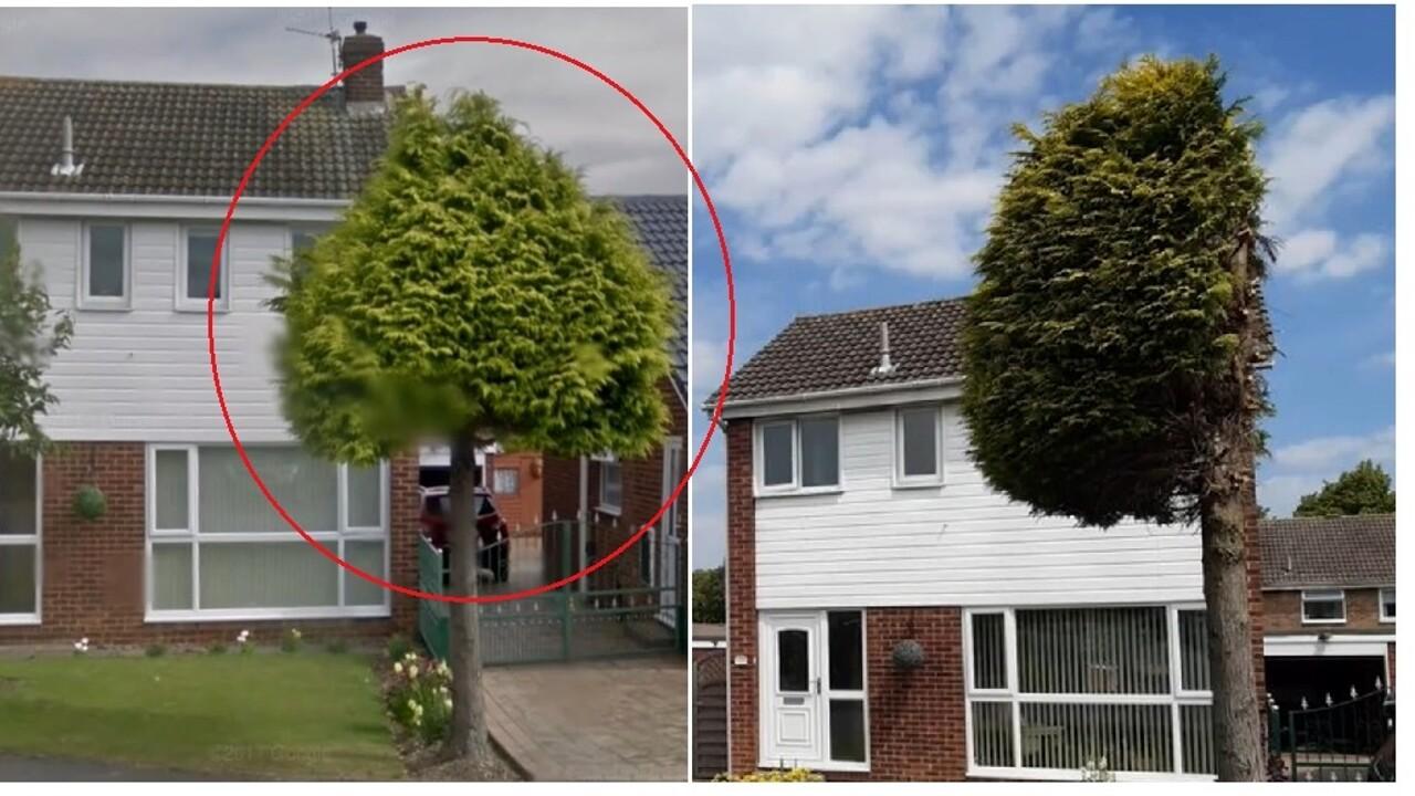 L'albero del vicino sporge nella sua proprietà e lui lo taglia a metà in verticale