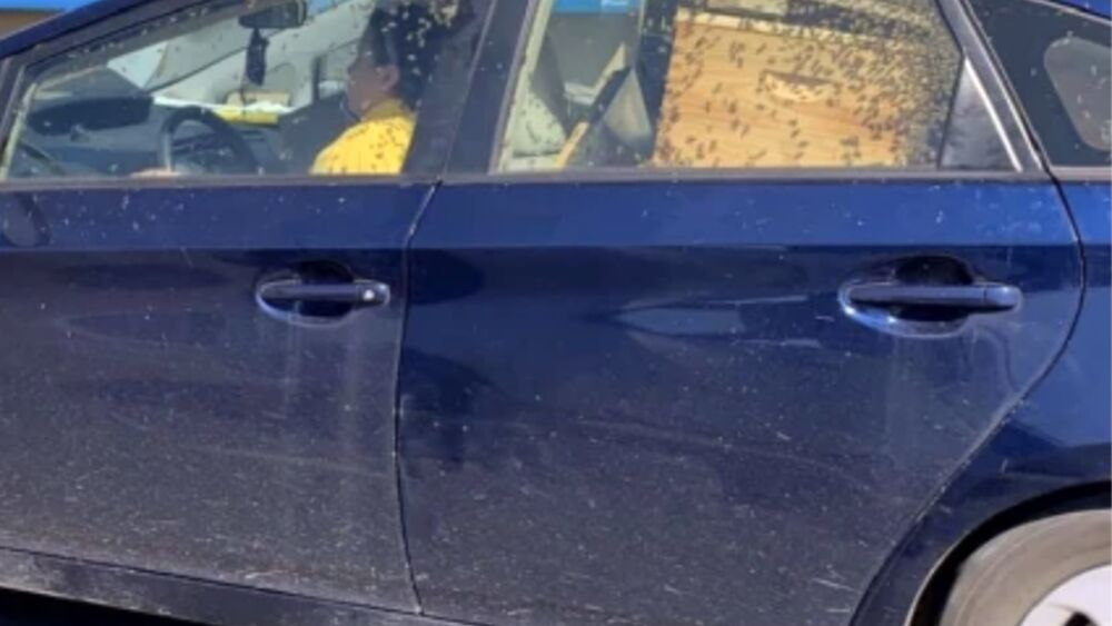 Guida con migliaia di api in auto: la foto da incubo diventa virale