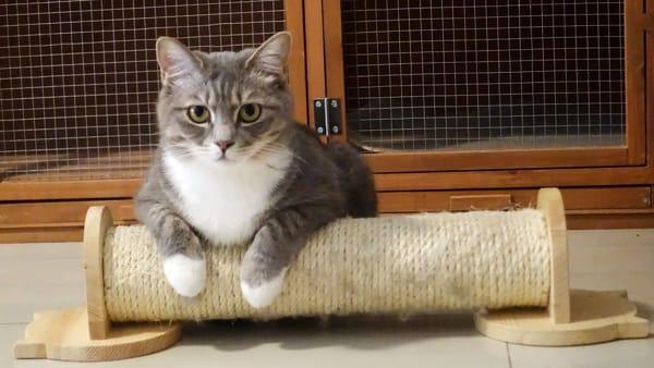 I tiragraffi: accessori fondamentali per il benessere del gatto e della casa