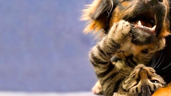 Problemi dentali: come occuparsi dell'igiene orale di cani e gatti