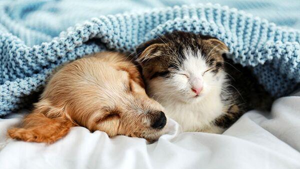 Come le stagioni influenzano il sonno di cani e gatti