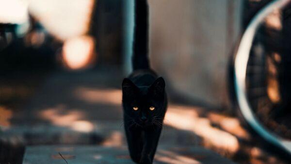 Animali e superstizioni: false credenze e racconti su cani, gatti e non solo