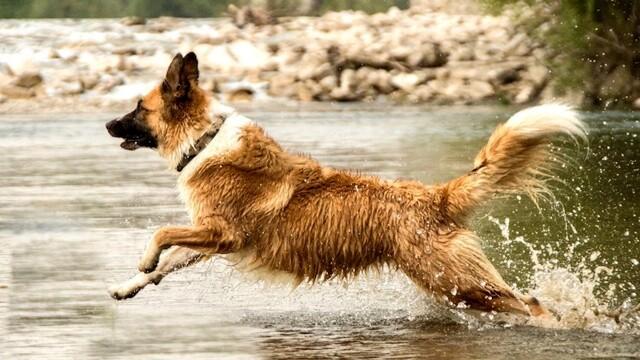 Lavare i cani, con Rolling Dogs scopriremo come farlo correttamente