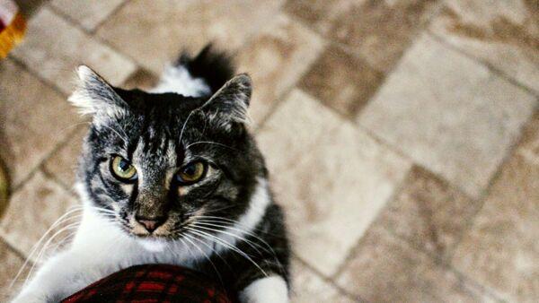 Perché il gatto segue ovunque il proprio padrone?