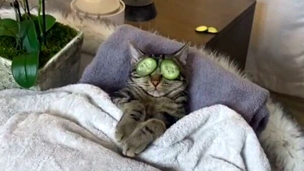Il video virale dei gatti che si rilassano in una spa