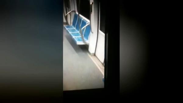 """Topo a spasso nella metro, il Pd attacca: """"Roma è uno zoo a cielo aperto"""""""