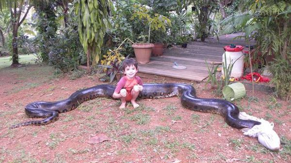 Lanaconda di 5 metri mangia il cane dellamico: lui la