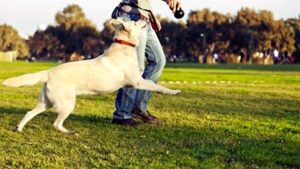 Asili per cani: il nostro pet al sicuro quando siamo a lavoro