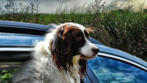Viaggiando insieme: consigli pratici per lo zainetto del nostro cane!