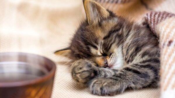 Rimedi naturali per dare sollievo al gatto quando ha il raffreddore