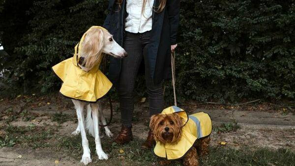 Come gestire le passeggiate con il cane in caso di maltempo: trucchi e consigli