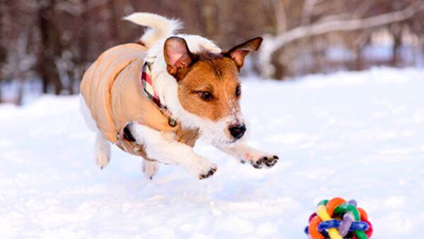Quando e come far indossare il cappottino al cane in inverno