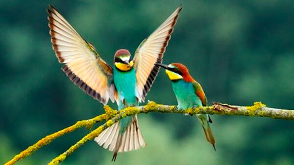 Le pratiche di corteggiamento più curiose del regno animale