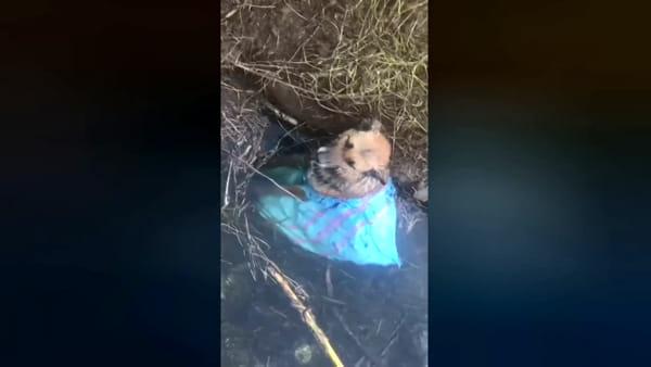 Pastore tedesco chiuso in un sacco e gettato in acqua come un rifiuto