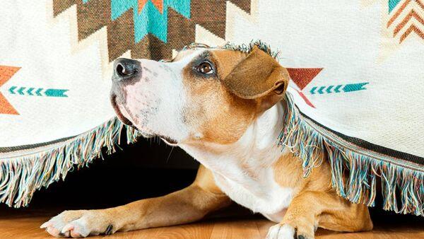 Cani e paura dei temporali, ecco come aiutarli