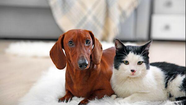 Come mantenere in salute le articolazioni dei pet