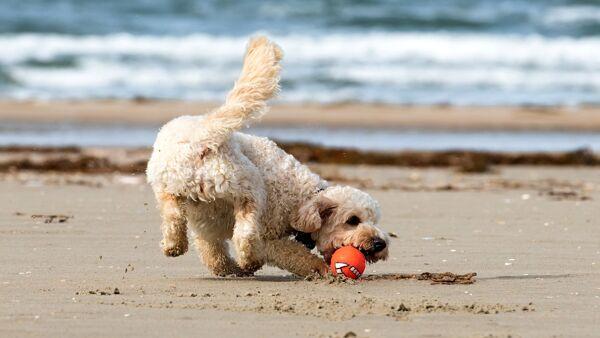 Vacanze al mare: i giochi da organizzare con il proprio cane