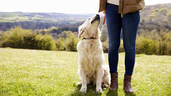 Cane e guinzaglio: come abituarlo e quale modello scegliere