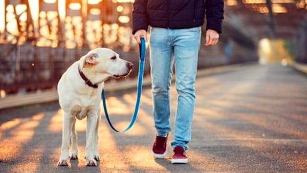 La scelta del guinzaglio per una passeggiata rilassante in compagnia del proprio cane