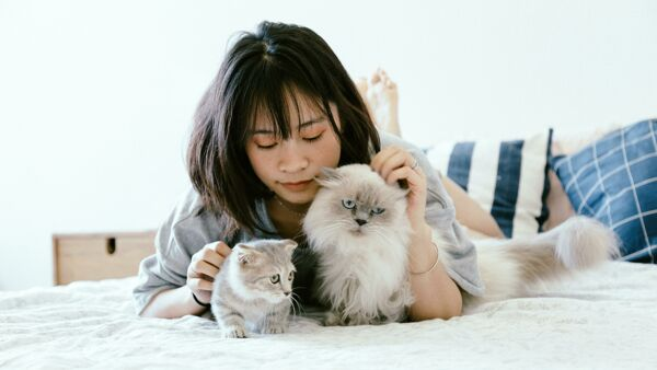 10 motivi per adottare un gatto