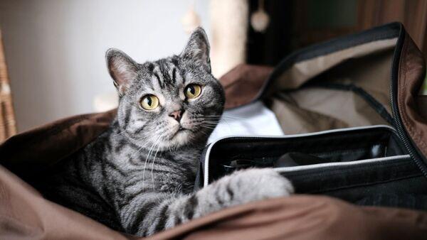 Gita con il gatto: come organizzarne una in sicurezza