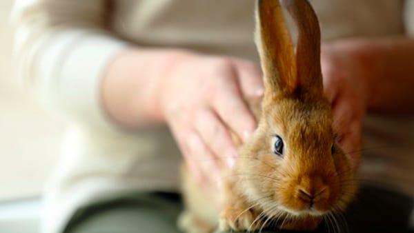 Come prendersi cura del coniglio