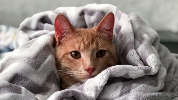 Le razze di gatti che soffrono il freddo