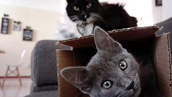 Perché i gatti amano entrare nelle scatole? Tutti i motivi di questo comportamento