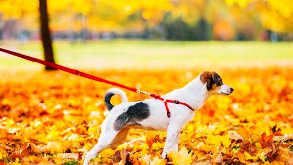 Come comportarsi quando il cane tira al guinzaglio