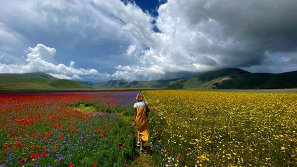 Castelluccio di Norcia, l'invasione per la fioritura vista dal cielo