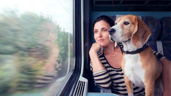 Tutte le regole per viaggiare in treno, in nave e in aereo con il quattro zampe