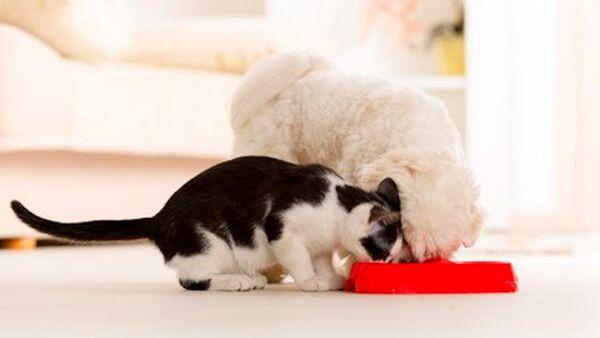Cibi secchi e umidi, cosa sapere sull'alimentazione dei nostri pet