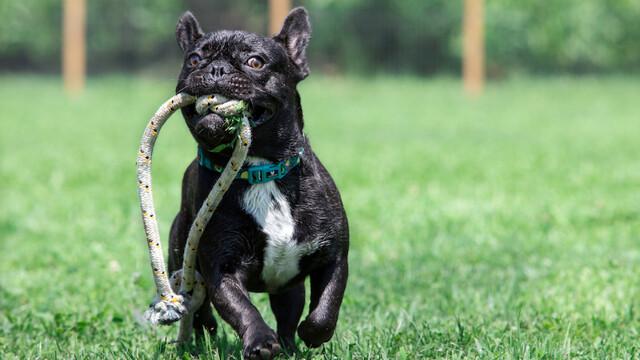 Divertirsi con i cani: i giochi consigliati da Rolling Dogs