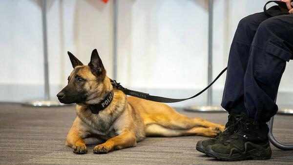 Il governo polacco introdurrà la pensione per cani e cavalli poliziotto