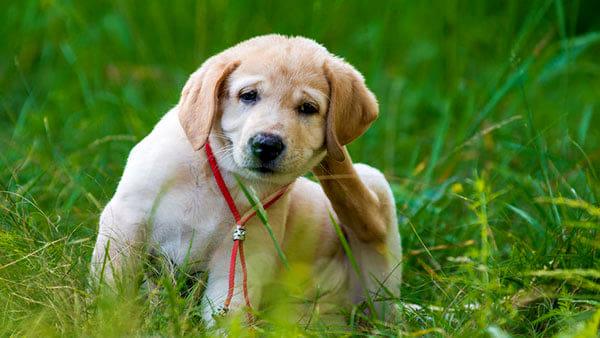 Antiparassitari, un valido aiuto per proteggere gli animali domestici