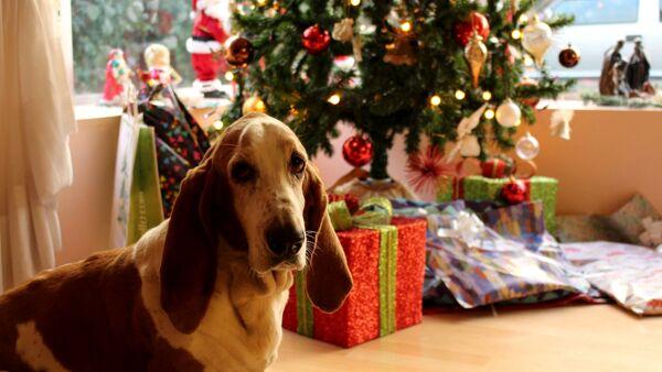 Decorazioni e addobbi di Natale a prova di zampa