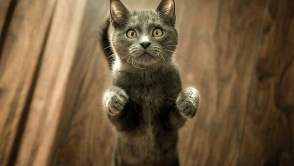 Come organizzare un percorso agility per il proprio gatto, in casa o in giardino