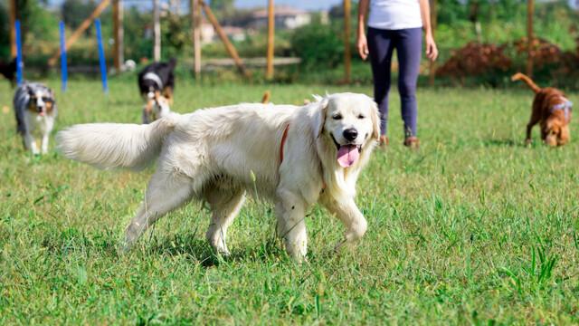 La pulizia delle parti sensibili del cane: come prendersi cura di zampe, occhi e orecchie