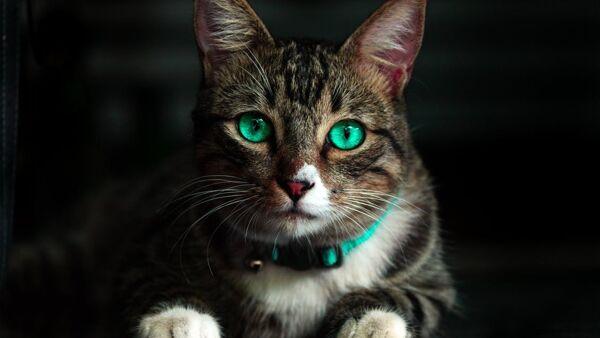 Guinzagli per gatti: le tipologie, come sceglierli e come usarli