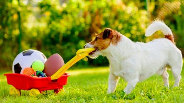 Giochi educativi per i cuccioli: quali sono e a cosa servono